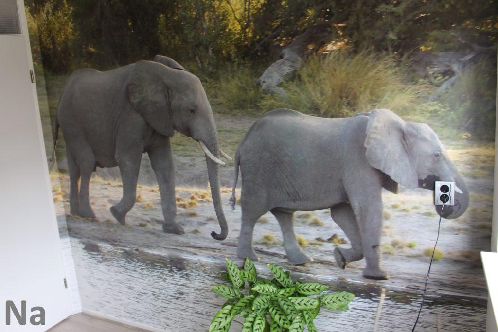 Fotobehang met olifanten, prachtig in deze Goudse studeerkamer